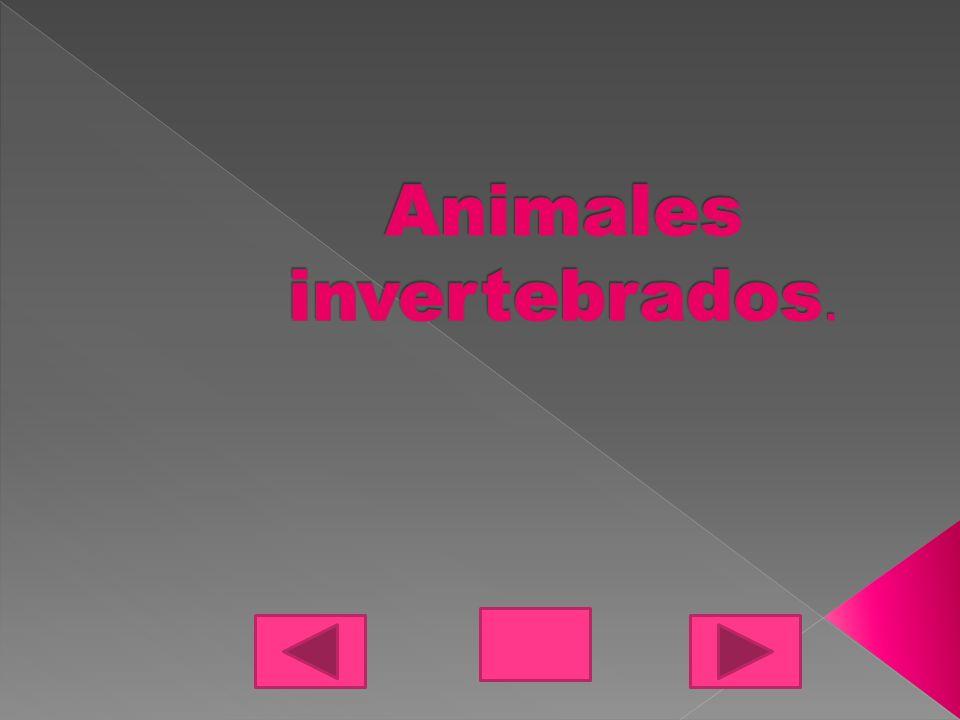 Los animales invertebrados se clasifican por no tener columna.