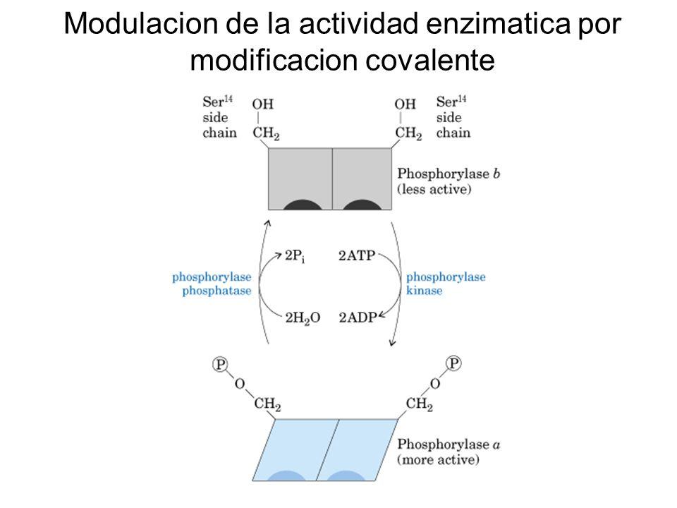 Especificidad enzimatica. Preferencia de la quimotripsina para distintos sustratos.