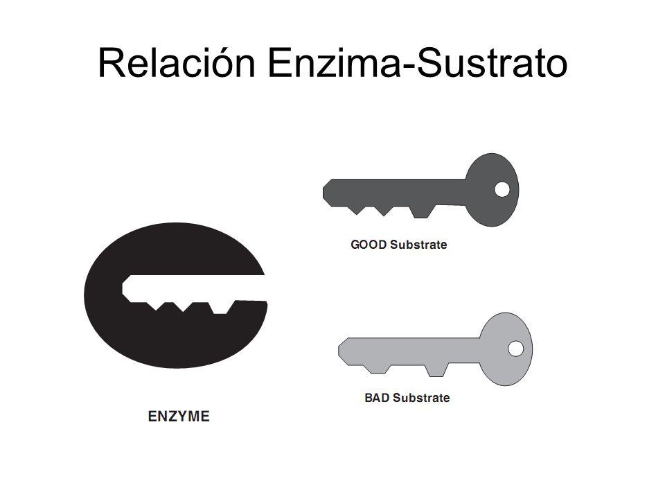 Cinetica enzimatica Herramientas y técnicas del analisis cinetico