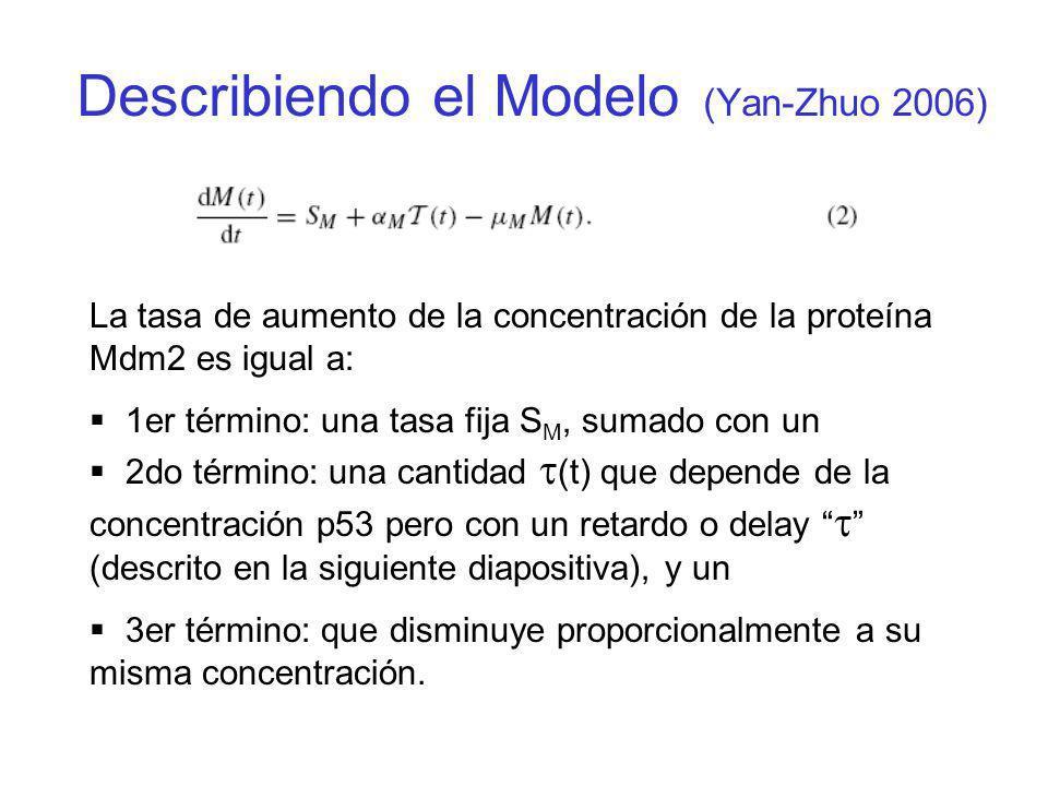 La tasa de aumento de la concentración de la proteína Mdm2 es igual a: 1er término: una tasa fija S M, sumado con un 2do término: una cantidad (t) que