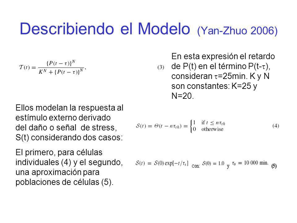 En esta expresión el retardo de P(t) en el término P(t- ), consideran =25min. K y N son constantes: K=25 y N=20. Ellos modelan la respuesta al estímul