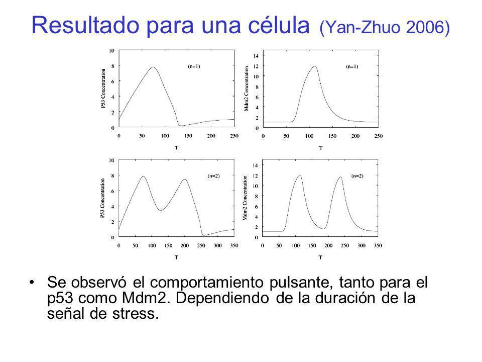 Resultado para una célula (Yan-Zhuo 2006) Se observó el comportamiento pulsante, tanto para el p53 como Mdm2. Dependiendo de la duración de la señal d