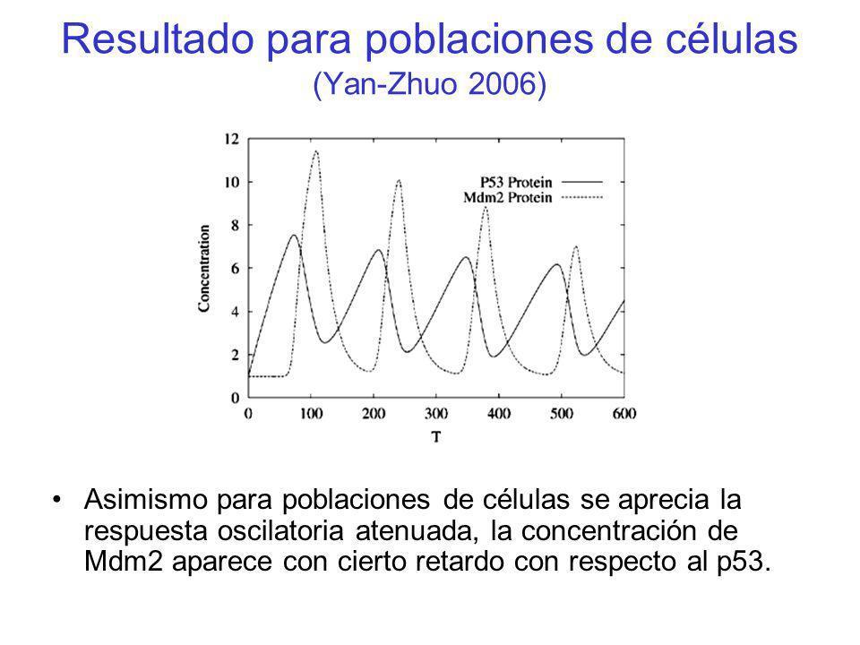 Resultado para poblaciones de células (Yan-Zhuo 2006) Asimismo para poblaciones de células se aprecia la respuesta oscilatoria atenuada, la concentrac