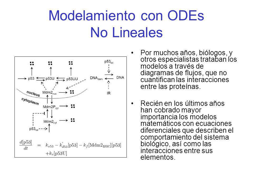 Modelado de Redes de Interacción Molecular con Ecuaciones Diferenciales El uso de Ecuaciones Diferenciales Ordinarias se basa en 2 suposiciones: 1.Los procesos de ciclos celulares se dan en periodos largos de tiempo (escala de tiempo = horas, ciclos circadianos: periodo = 1día).