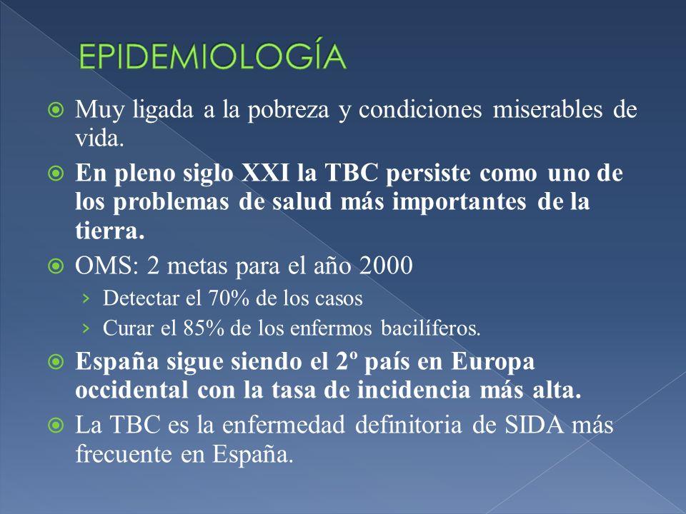 Leucocitosis leve con linfocitosis (ocasional leucopenia).