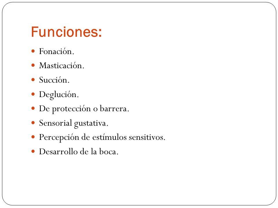 Funciones: Fonación. Masticación. Succión. Deglución. De protección o barrera. Sensorial gustativa. Percepción de estímulos sensitivos. Desarrollo de