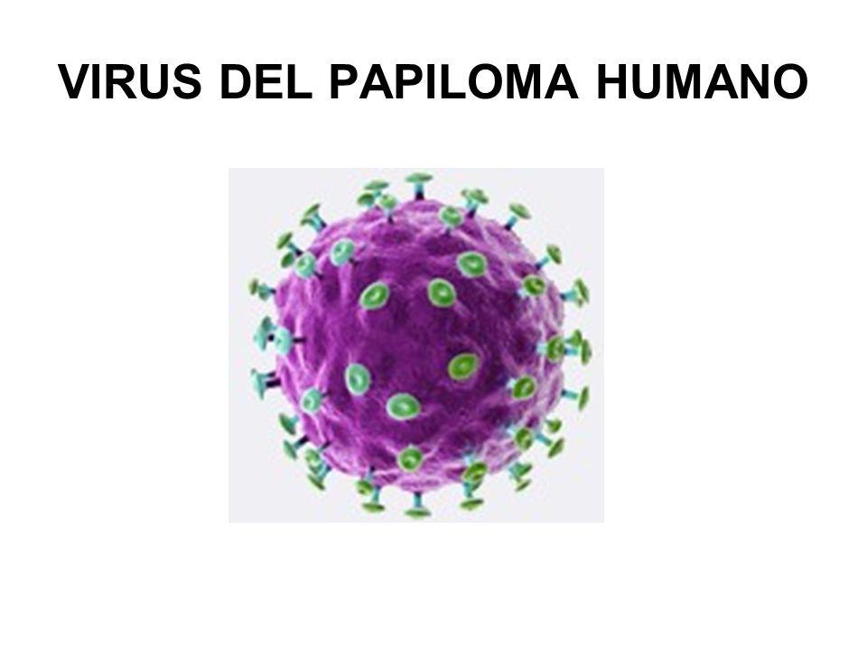 VPH Y CANCER DE CERVIX El VPH es causa necesaria, pero no suficiente.