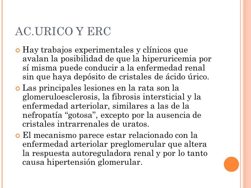 AC.URICO Y ERC Hay trabajos experimentales y clínicos que avalan la posibilidad de que la hiperuricemia por sí misma puede conducir a la enfermedad re
