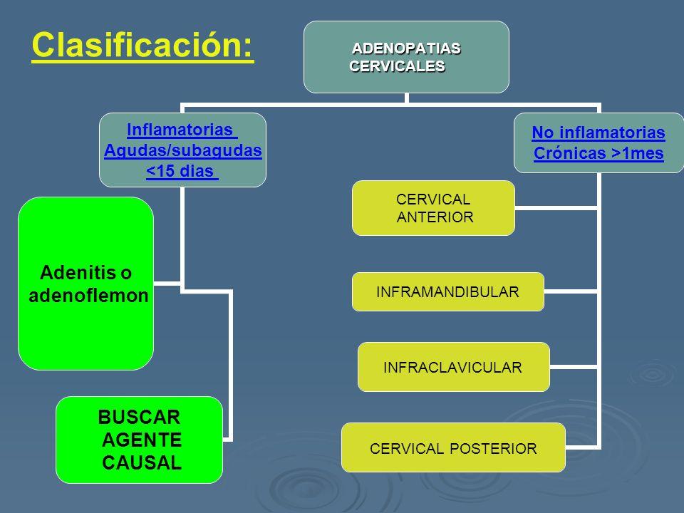 ADENOPATIASCERVICALES Inflamatorias Agudas/subagudas <15 dias Adenitis o adenoflemon BUSCAR AGENTE CAUSAL No inflamatorias Crónicas >1mes CERVICAL ANT