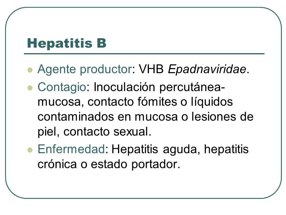 Hepatitis B Agente productor: VHB Epadnaviridae. Contagio: Inoculación percutánea- mucosa, contacto fómites o líquidos contaminados en mucosa o lesion