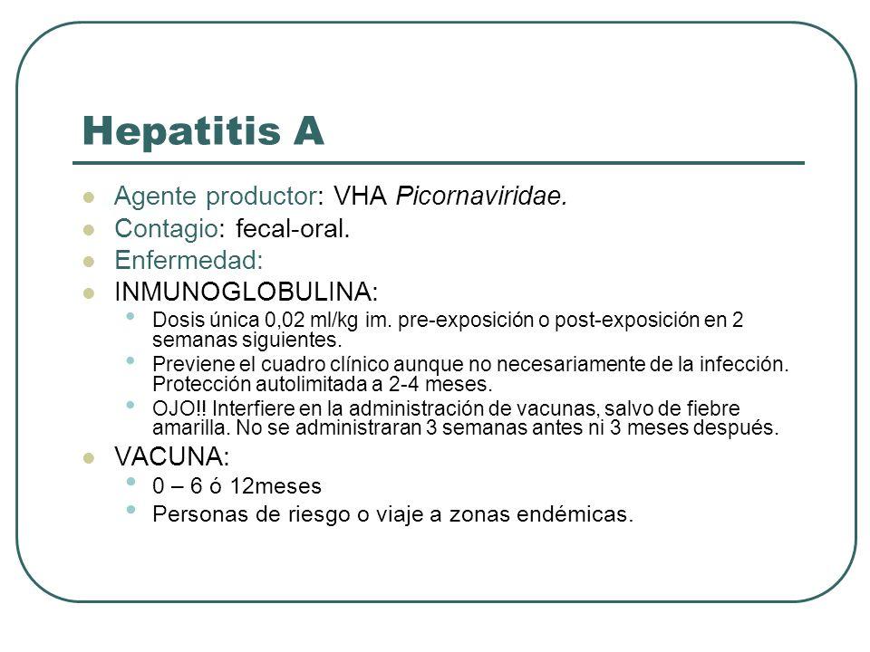 Hepatitis A Agente productor: VHA Picornaviridae. Contagio: fecal-oral. Enfermedad: INMUNOGLOBULINA: Dosis única 0,02 ml/kg im. pre-exposición o post-