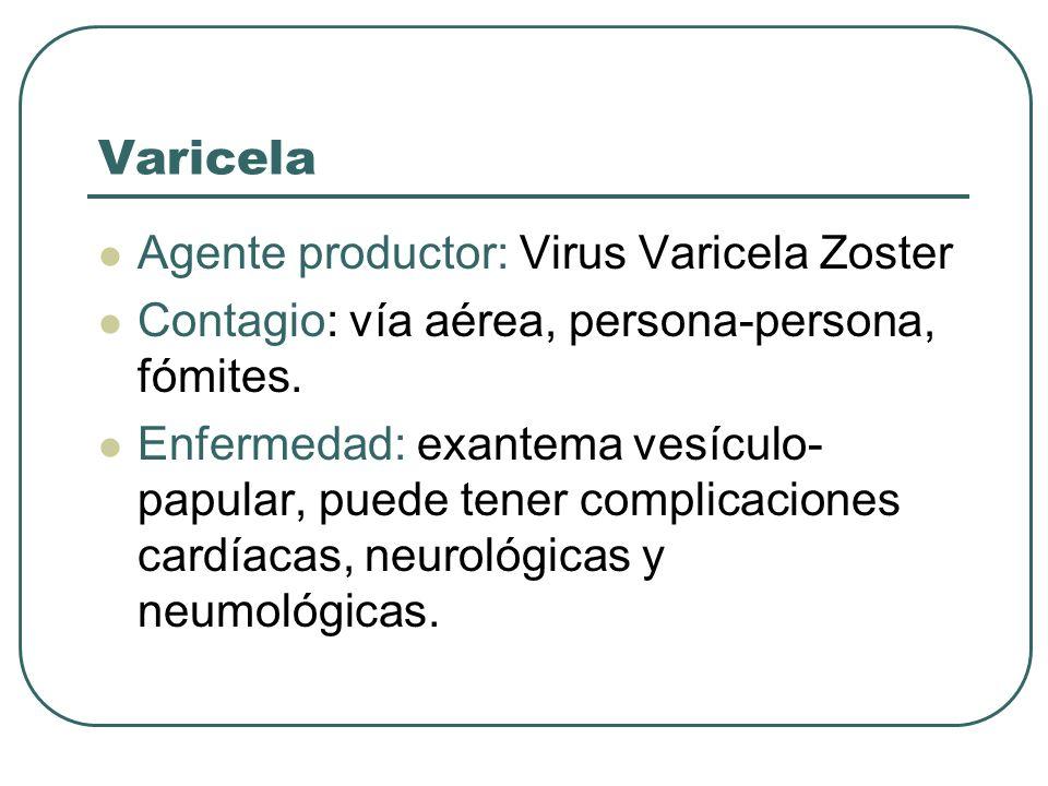 Varicela Agente productor: Virus Varicela Zoster Contagio: vía aérea, persona-persona, fómites. Enfermedad: exantema vesículo- papular, puede tener co