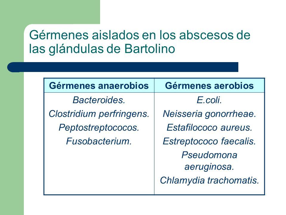 Gérmenes aislados en los abscesos de las glándulas de Bartolino Gérmenes anaerobiosGérmenes aerobios Bacteroides. Clostridium perfringens. Peptostrept