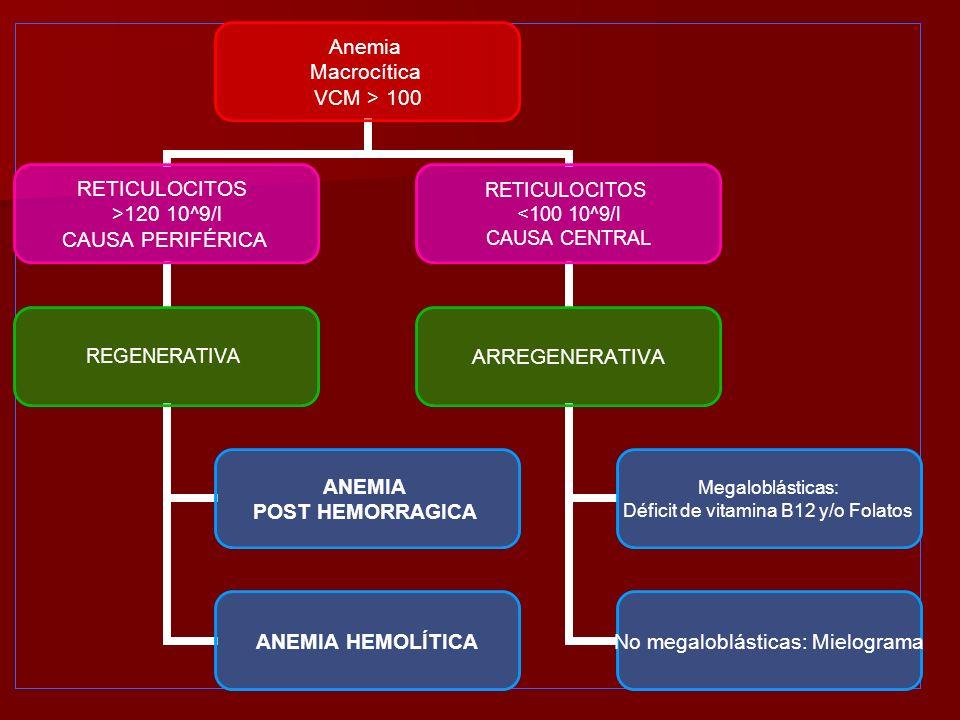Anemia Macrocítica VCM > 100 RETICULOCITOS >120 10^9/l CAUSA PERIFÉRICA REGENERATIVA ANEMIA POST HEMORRAGICA ANEMIA HEMOLÍTICA RETICULOCITOS <100 10^9