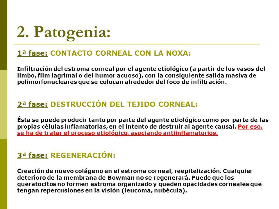 2. Patogenia: 1ª fase: CONTACTO CORNEAL CON LA NOXA: Infiltración del estroma corneal por el agente etiológico (a partir de los vasos del limbo, film