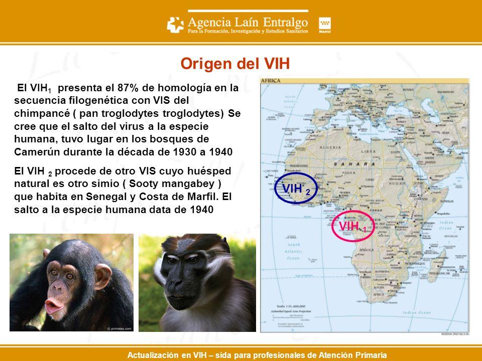 Actualización en VIH – sida para profesionales de Atención Primaria El VIH 1 presenta el 87% de homología en la secuencia filogenética con VIS del chimpancé ( pan troglodytes troglodytes) Se cree que el salto del virus a la especie humana, tuvo lugar en los bosques de Camerún durante la década de 1930 a 1940 El VIH 2 procede de otro VIS cuyo huésped natural es otro simio ( Sooty mangabey ) que habita en Senegal y Costa de Marfil.