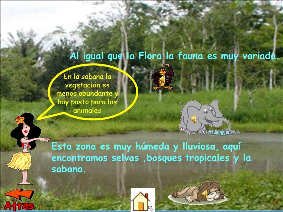 Esta zona es muy húmeda y lluviosa, aquí encontramos selvas,bosques tropicales y la sabana.