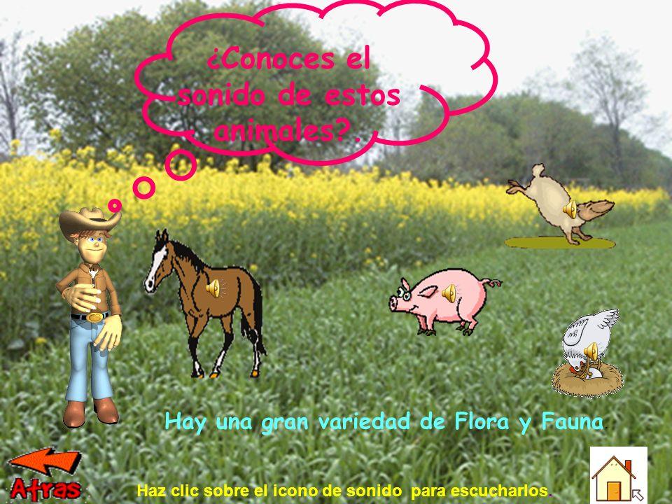 Hay una gran variedad de Flora y Fauna.¿ Conoces el sonido de estos animales?.
