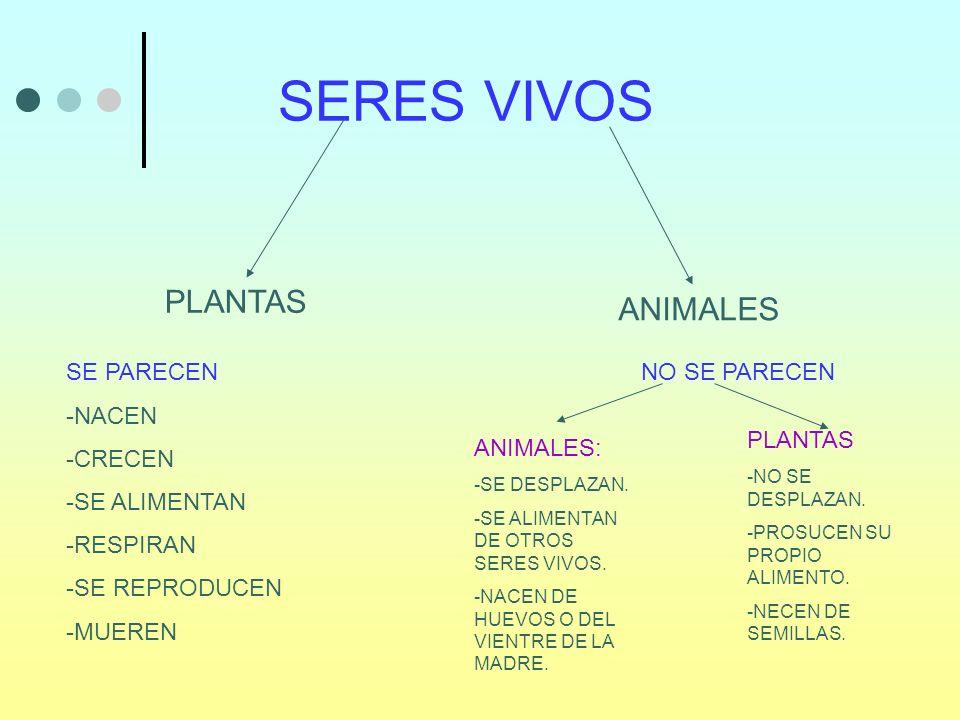 SERES VIVOS PLANTAS ANIMALES SE PARECEN -NACEN -CRECEN -SE ALIMENTAN -RESPIRAN -SE REPRODUCEN -MUEREN NO SE PARECEN ANIMALES: -SE DESPLAZAN. -SE ALIME