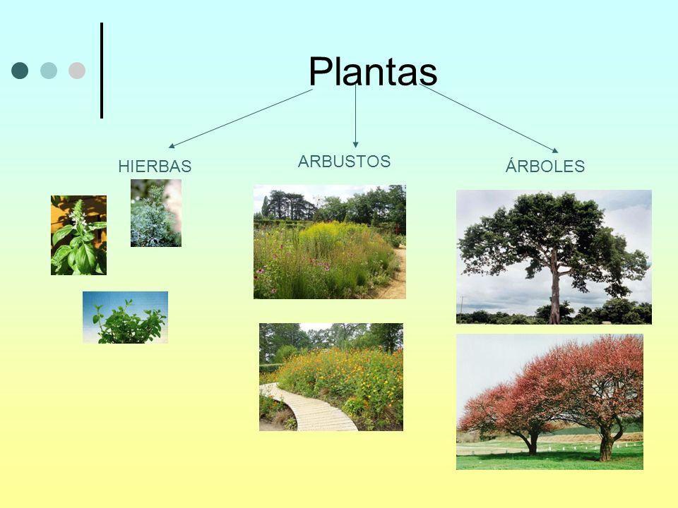 Plantas HIERBAS ARBUSTOS ÁRBOLES