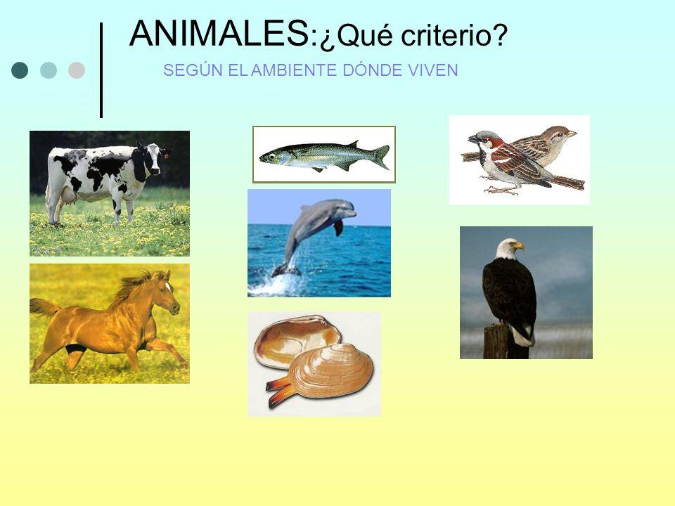 ANIMALES :¿Qué criterio? SEGÚN EL AMBIENTE DÓNDE VIVEN