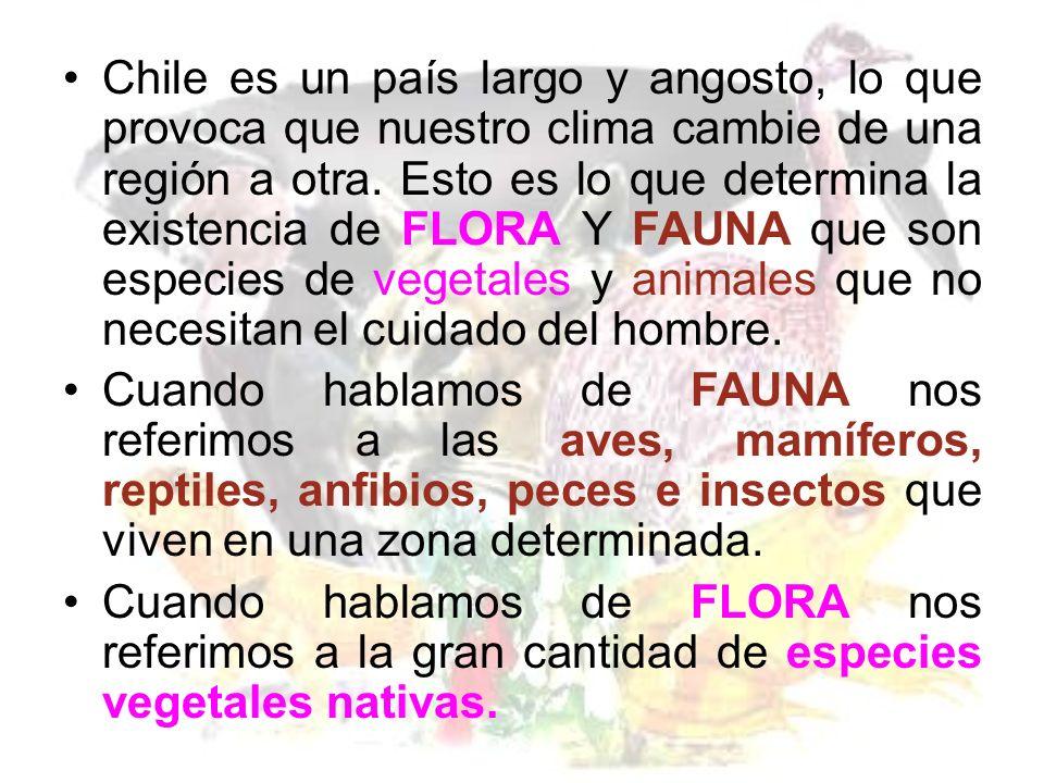 La FLORA típica de la zona sur son: Araucaria Coigüe Canelo