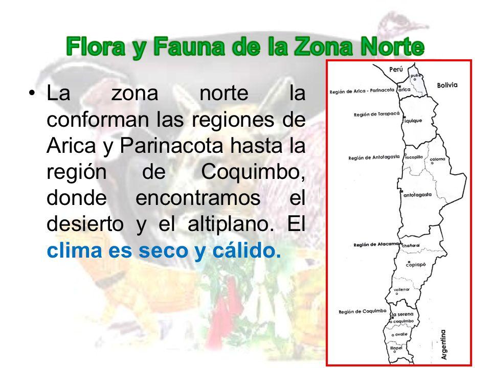 Algunas especies de la FAUNA de esta zona son: Alpaca Guanaco Llama