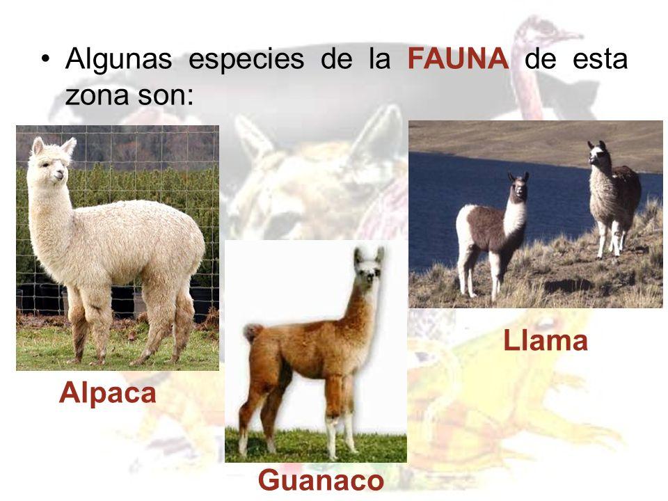 Fauna: Coipo, Liebre, Zorro Culpeo y aves como el Cisne de cuello negro, Pelícano, Gaviota, Tagua, Chirihue y Trile.