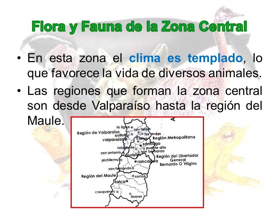 Algunas especies de la FAUNA son: Zorro Culpeo Puma Coipo TencaLoica