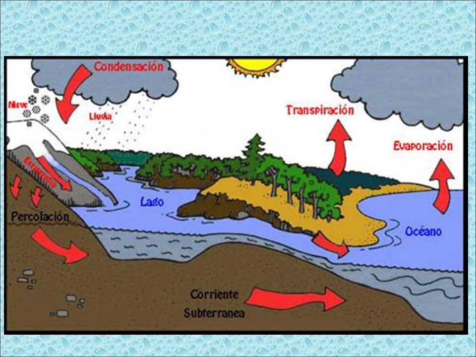 El agua contenida en las nubes cae a la tierra (se precipita) en la forma de lluvia, granizo y nieve.