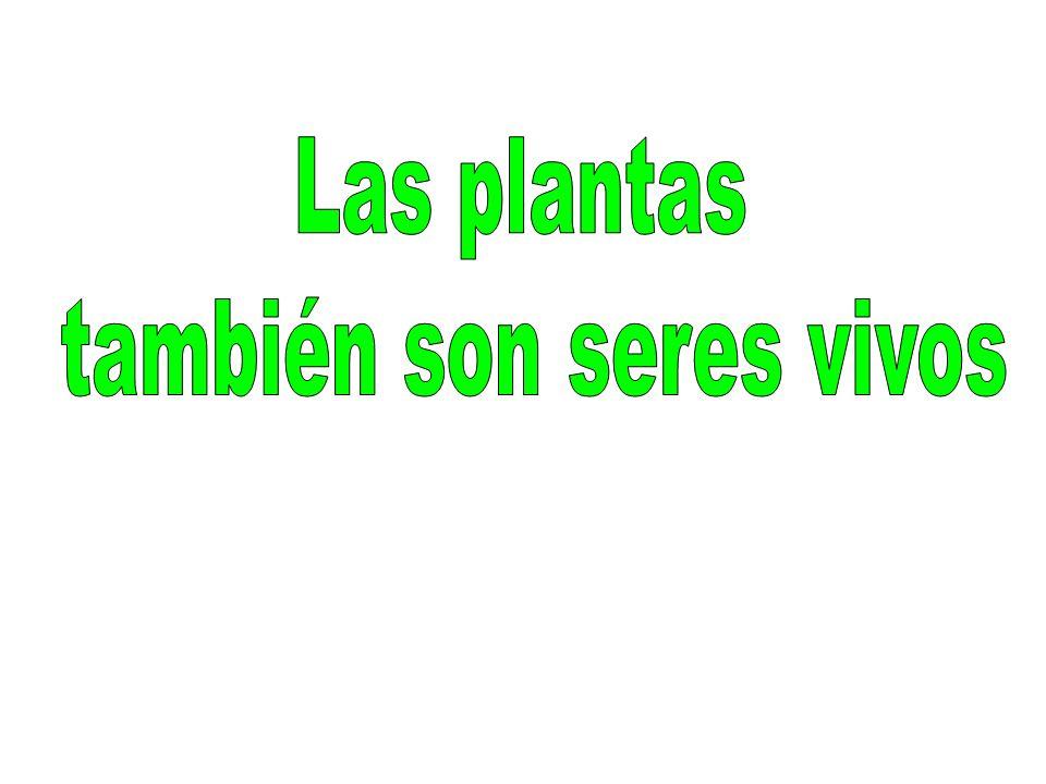 Las plantas al igual que los animales y los seres humanos, también son seres vivos.