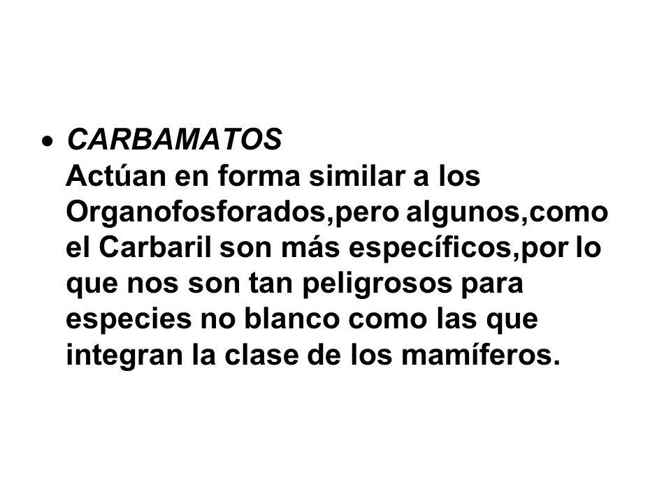 CARBAMATOS Actúan en forma similar a los Organofosforados,pero algunos,como el Carbaril son más específicos,por lo que nos son tan peligrosos para esp