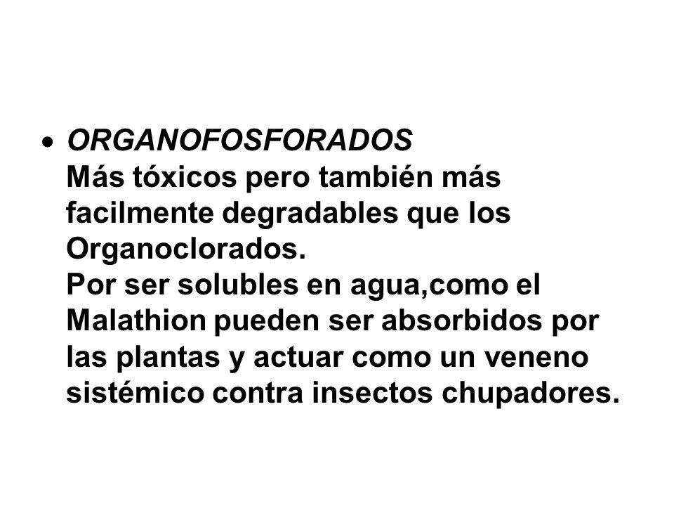 ORGANOFOSFORADOS Más tóxicos pero también más facilmente degradables que los Organoclorados. Por ser solubles en agua,como el Malathion pueden ser abs