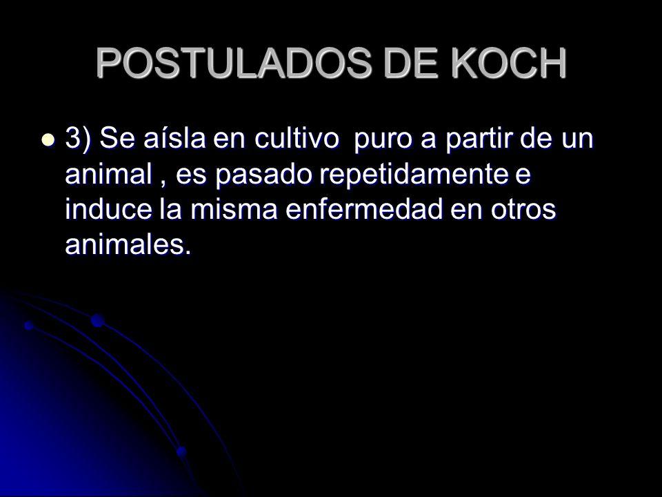 POSTULADOS DE KOCH 3) Se aísla en cultivo puro a partir de un animal, es pasado repetidamente e induce la misma enfermedad en otros animales. 3) Se aí