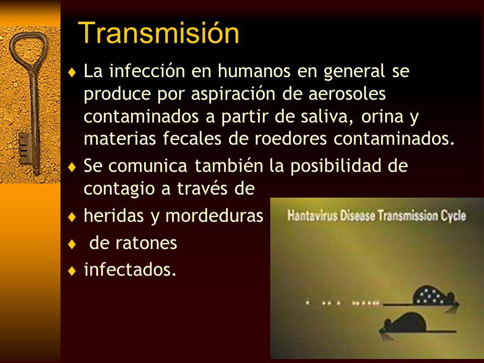Transmisión La infección en humanos en general se produce por aspiración de aerosoles contaminados a partir de saliva, orina y materias fecales de roe