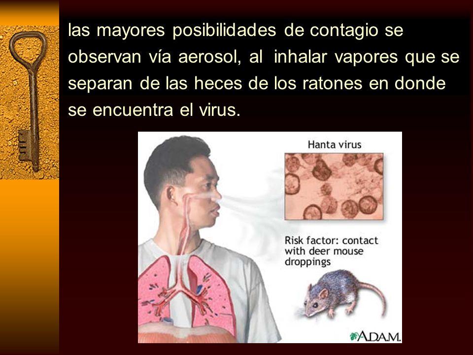 las mayores posibilidades de contagio se observan vía aerosol, al inhalar vapores que se separan de las heces de los ratones en donde se encuentra el