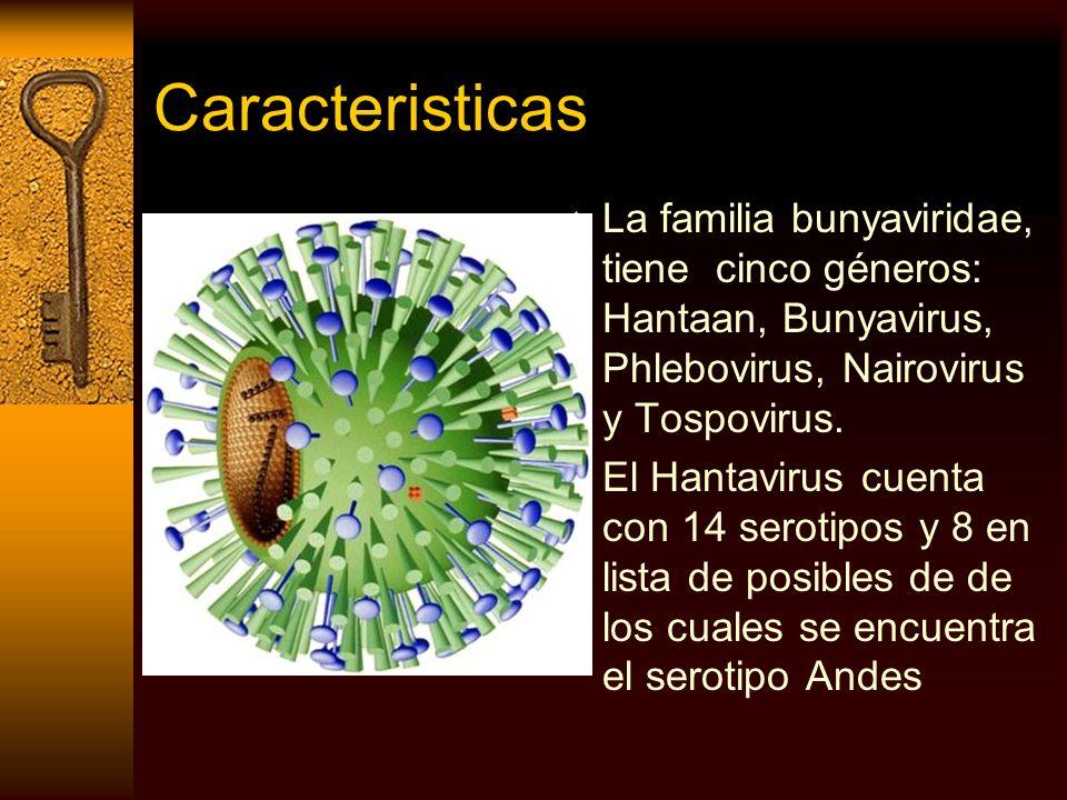 Caracteristicas La familia bunyaviridae, tiene cinco géneros: Hantaan, Bunyavirus, Phlebovirus, Nairovirus y Tospovirus. El Hantavirus cuenta con 14 s