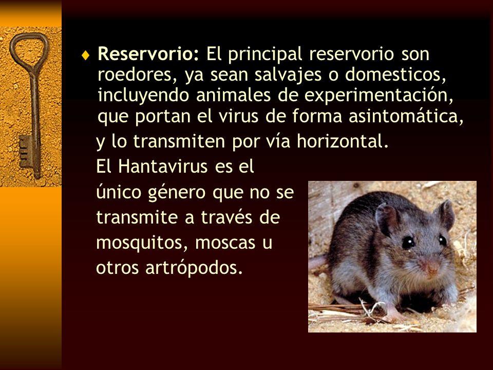 Reservorio: El principal reservorio son roedores, ya sean salvajes o domesticos, incluyendo animales de experimentación, que portan el virus de forma