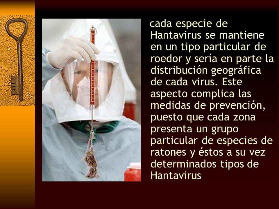 cada especie de Hantavirus se mantiene en un tipo particular de roedor y sería en parte la distribución geográfica de cada virus. Este aspecto complic