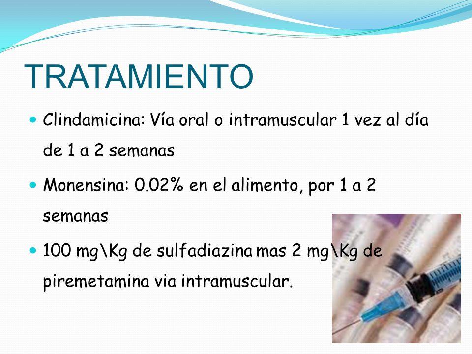 TRATAMIENTO Clindamicina: Vía oral o intramuscular 1 vez al día de 1 a 2 semanas Monensina: 0.02% en el alimento, por 1 a 2 semanas 100 mg\Kg de sulfa