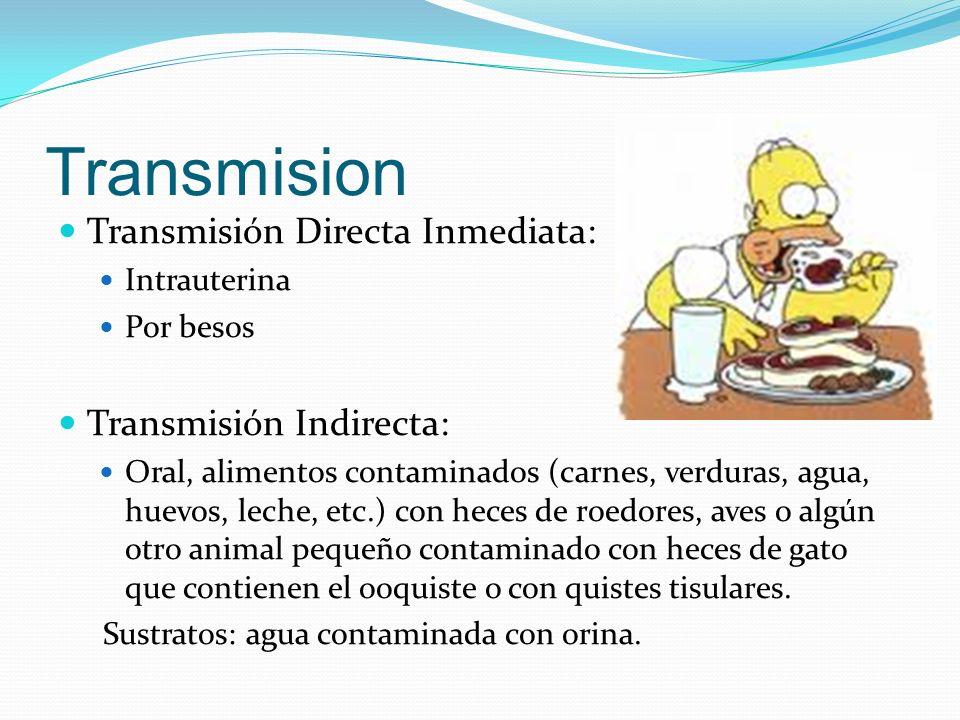 Transmision Transmisión Directa Inmediata: Intrauterina Por besos Transmisión Indirecta: Oral, alimentos contaminados (carnes, verduras, agua, huevos,