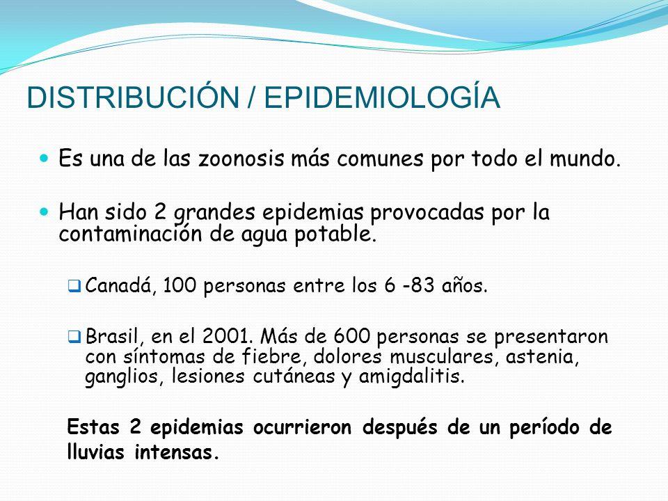 DISTRIBUCIÓN / EPIDEMIOLOGÍA Es una de las zoonosis más comunes por todo el mundo. Han sido 2 grandes epidemias provocadas por la contaminación de agu
