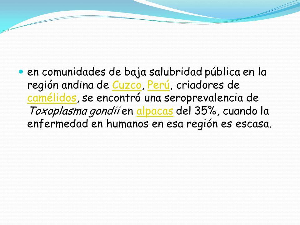 en comunidades de baja salubridad pública en la región andina de Cuzco, Perú, criadores de camélidos, se encontró una seroprevalencia de Toxoplasma go