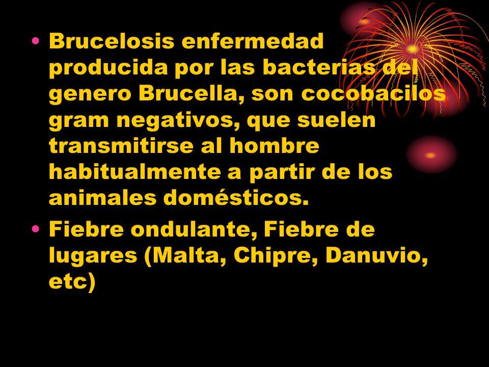 Brucelosis enfermedad producida por las bacterias del genero Brucella, son cocobacilos gram negativos, que suelen transmitirse al hombre habitualmente