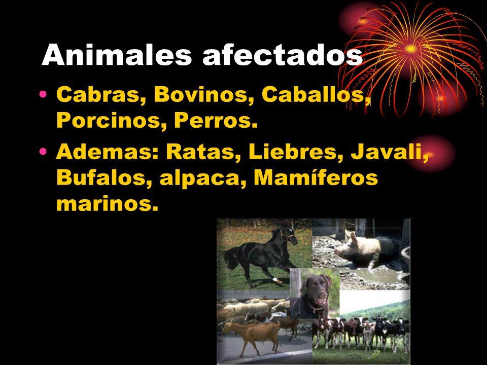 Animales afectados Cabras, Bovinos, Caballos, Porcinos, Perros. Ademas: Ratas, Liebres, Javali, Bufalos, alpaca, Mamíferos marinos.