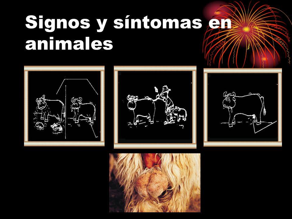 Signos y síntomas en animales