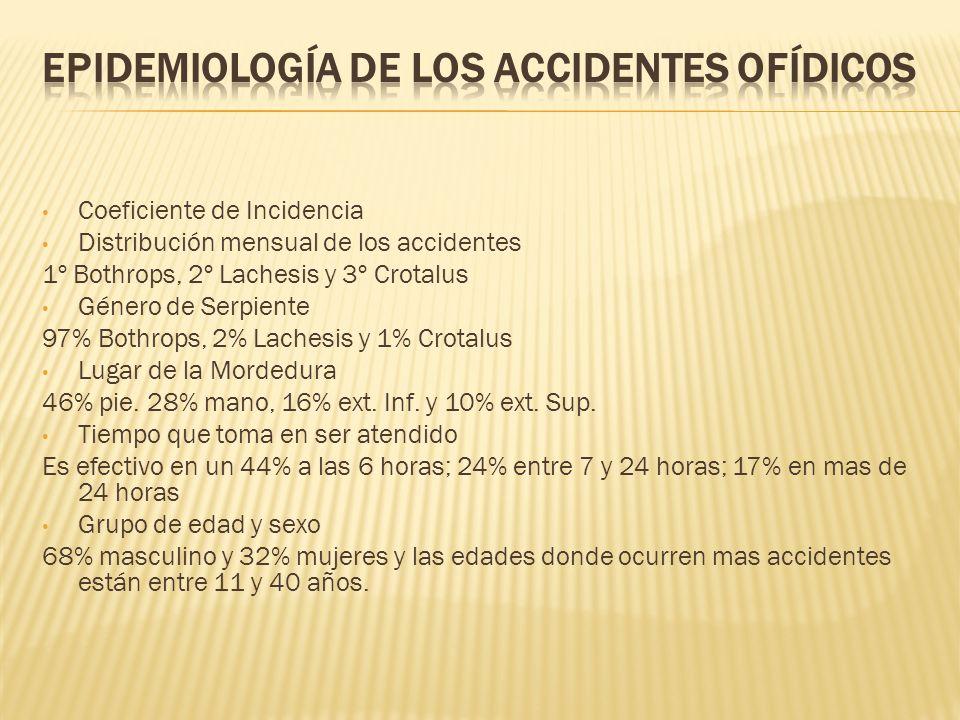 Coeficiente de Incidencia Distribución mensual de los accidentes 1º Bothrops, 2º Lachesis y 3º Crotalus Género de Serpiente 97% Bothrops, 2% Lachesis