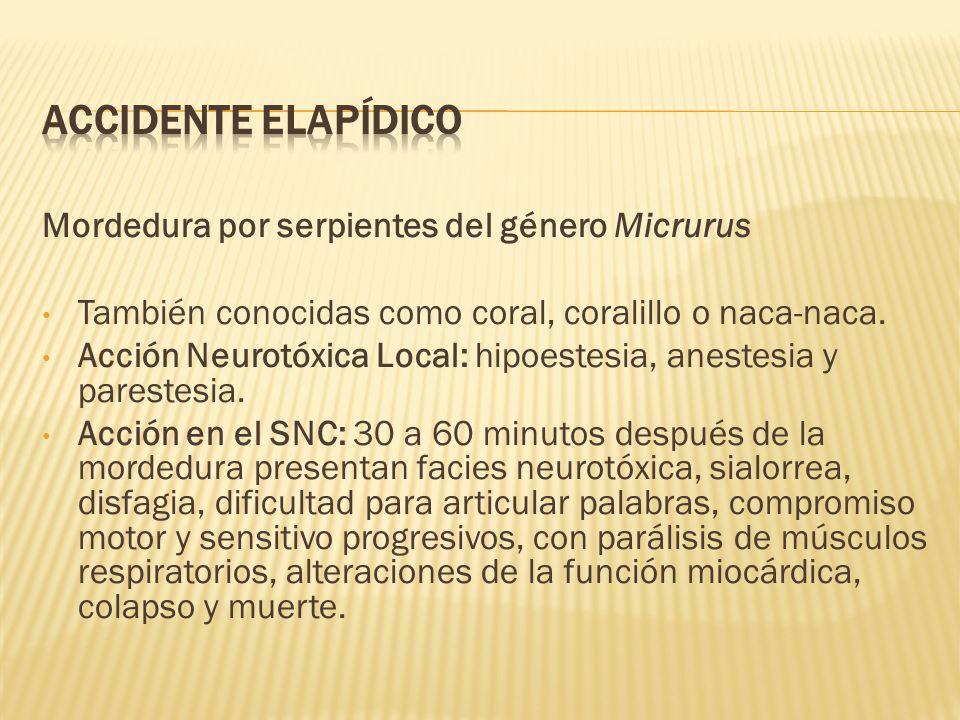 Mordedura por serpientes del género Micrurus También conocidas como coral, coralillo o naca-naca. Acción Neurotóxica Local: hipoestesia, anestesia y p
