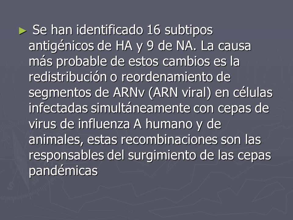 Se han identificado 16 subtipos antigénicos de HA y 9 de NA. La causa más probable de estos cambios es la redistribución o reordenamiento de segmentos