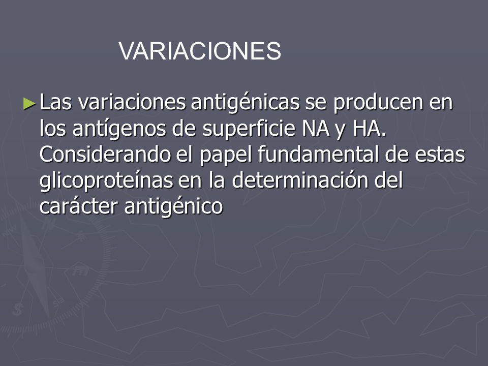Las variaciones antigénicas se producen en los antígenos de superficie NA y HA. Considerando el papel fundamental de estas glicoproteínas en la determ